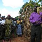 Vella Chipofya shows off his fields at Emazinyeni Field Day. (Photo Credit: Lauren Classen)