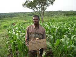 Manford Jere standing in his demonstration sorghum field, February 2007.