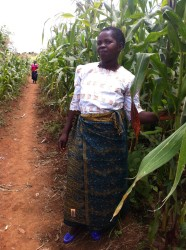 Woman showing her beautiful pigeon pea/maize crop!