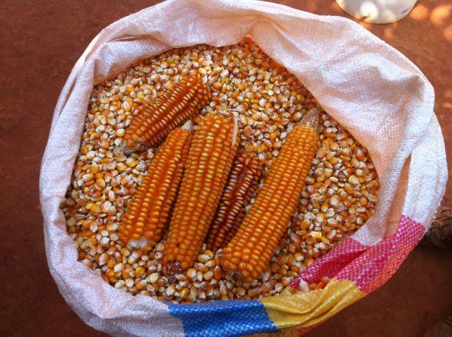 Orange maize
